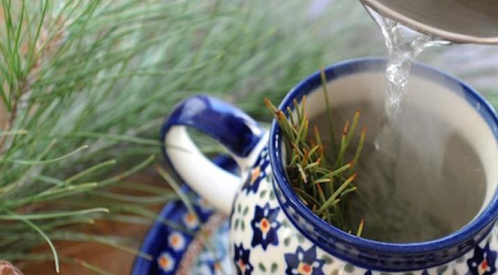 Pine Needle Tea - A Healthy Alternative